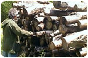 RESPONSABLE D'EXPLOITATION FORESTIERE